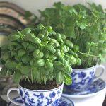 03-herb-garden-ideas-homebnc