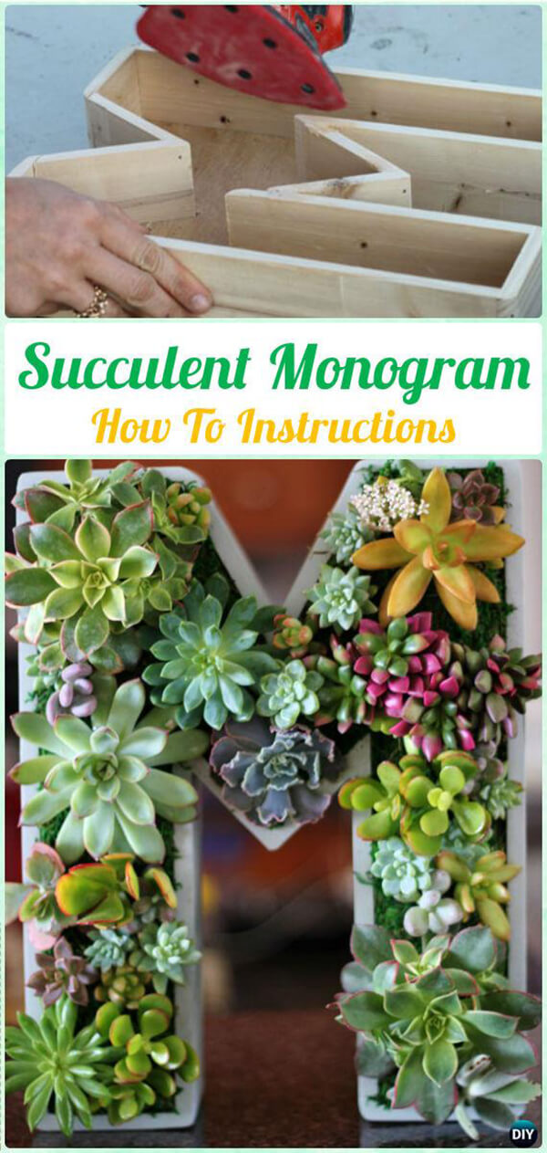 Grow Succulents in an Oversized Initial Letter