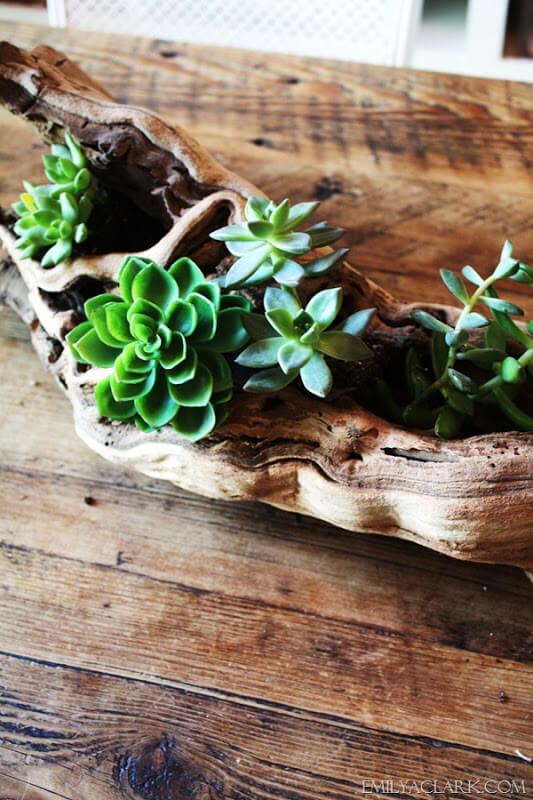 Graceful Driftwood Makes a Nice Planter