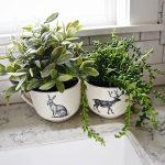07-farmhouse-plant-decor-ideas-homebnc