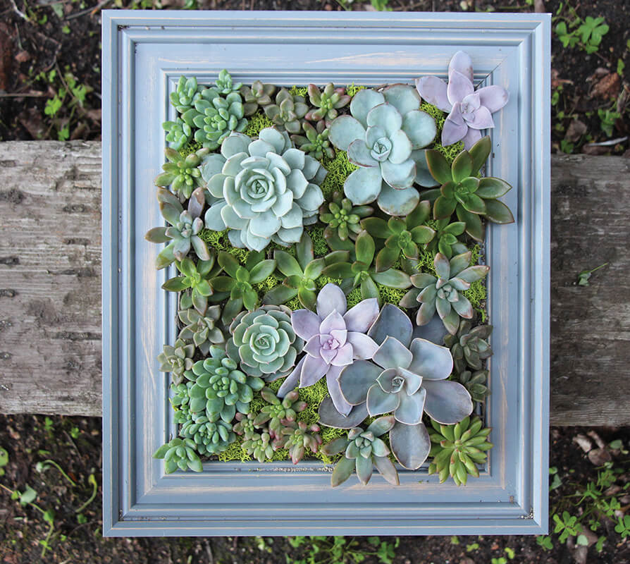 Make a Frame with Pretty Succulents