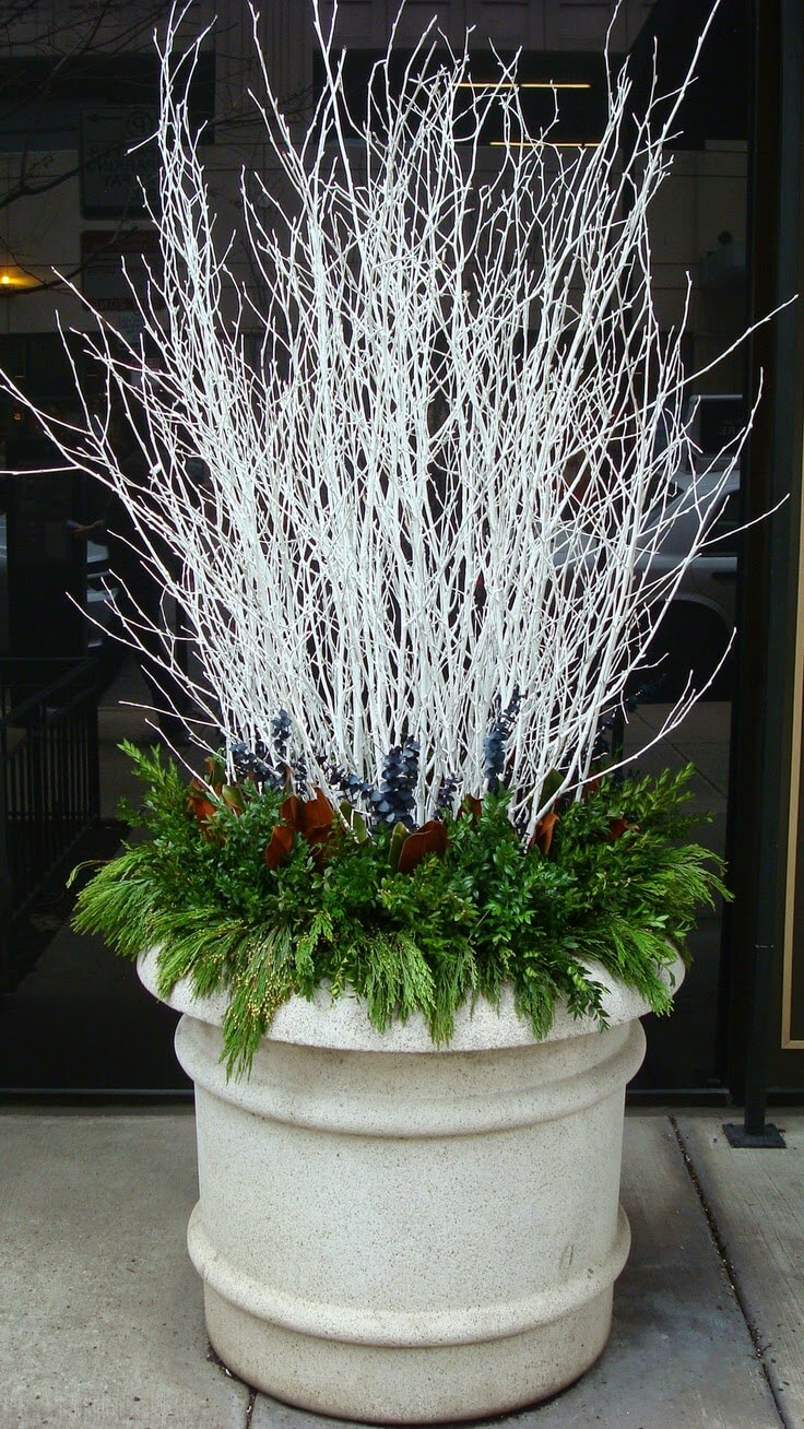 Winter White Branches With Evergreens