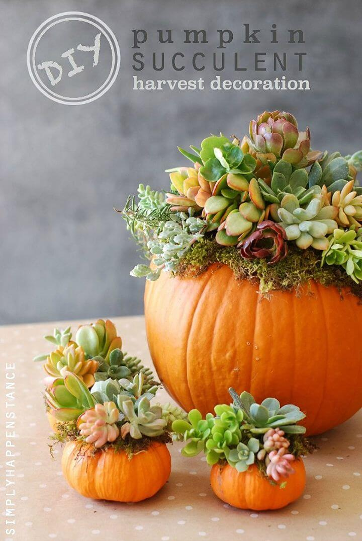 Succulents Stand Out Against Orange