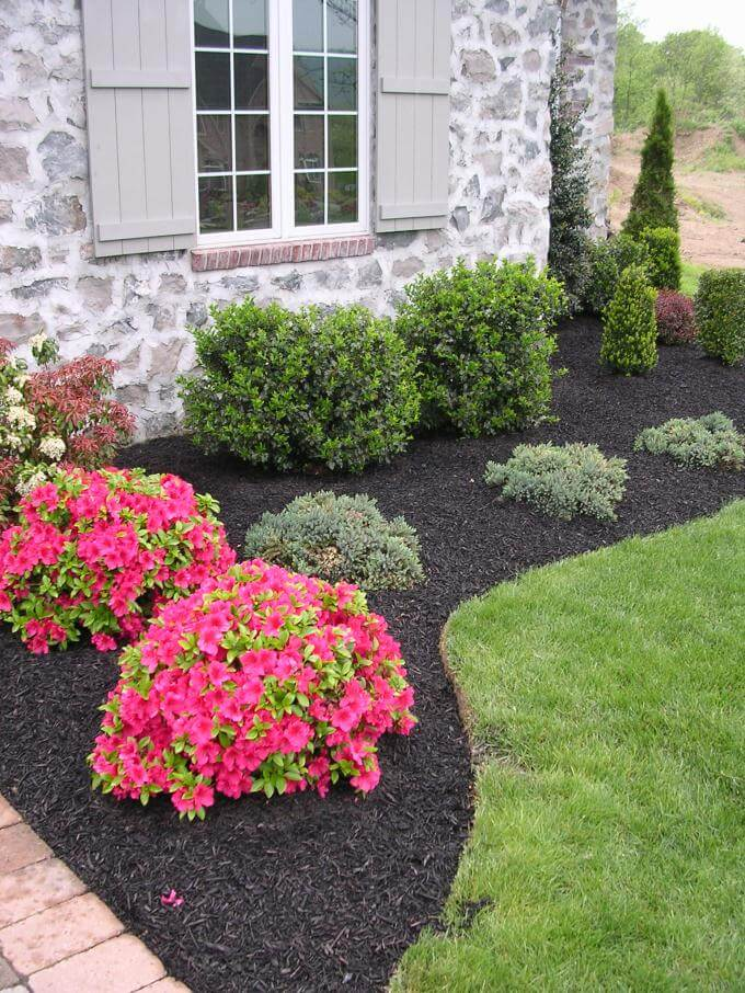 Low Maintenance Evergreen Border with a Pop of Color