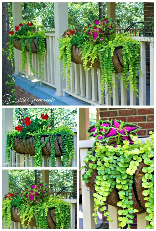 Brightly Colored Coleus and Geranium Porch Planters