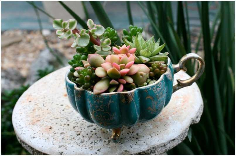 Succulents in an Old Footed Bowl