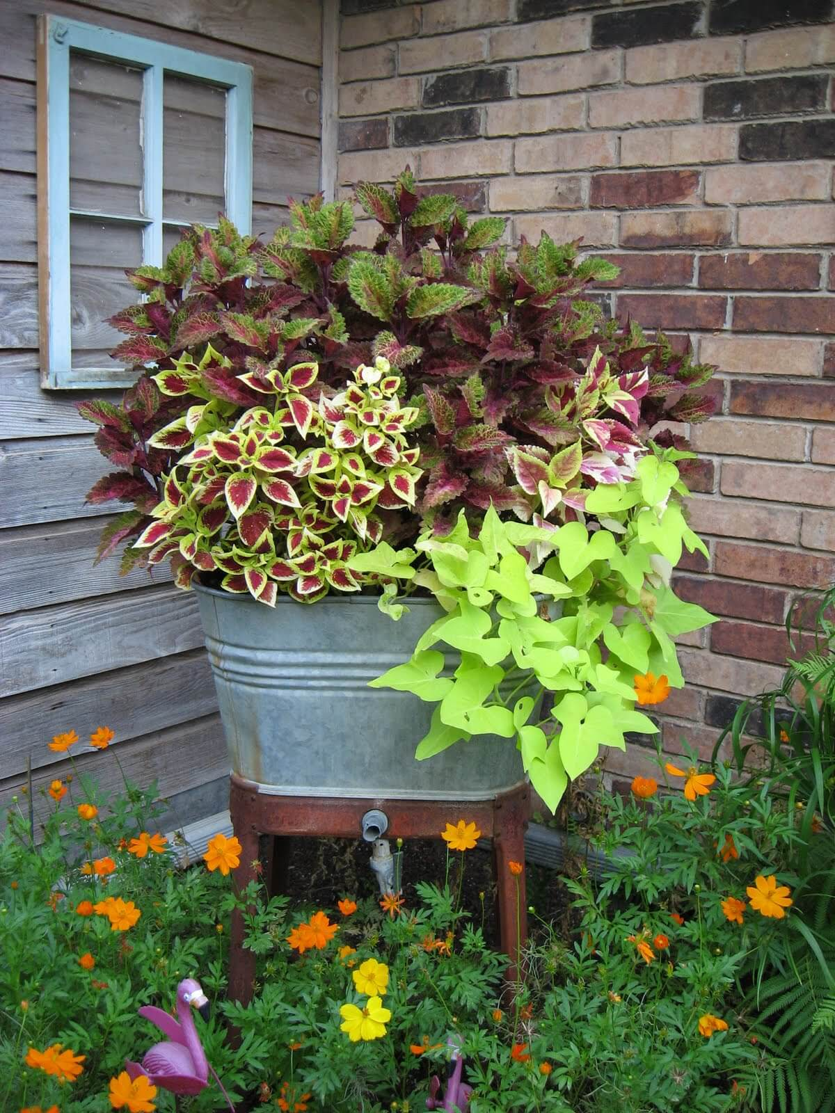 Wash Tub Planter Filled with Plants
