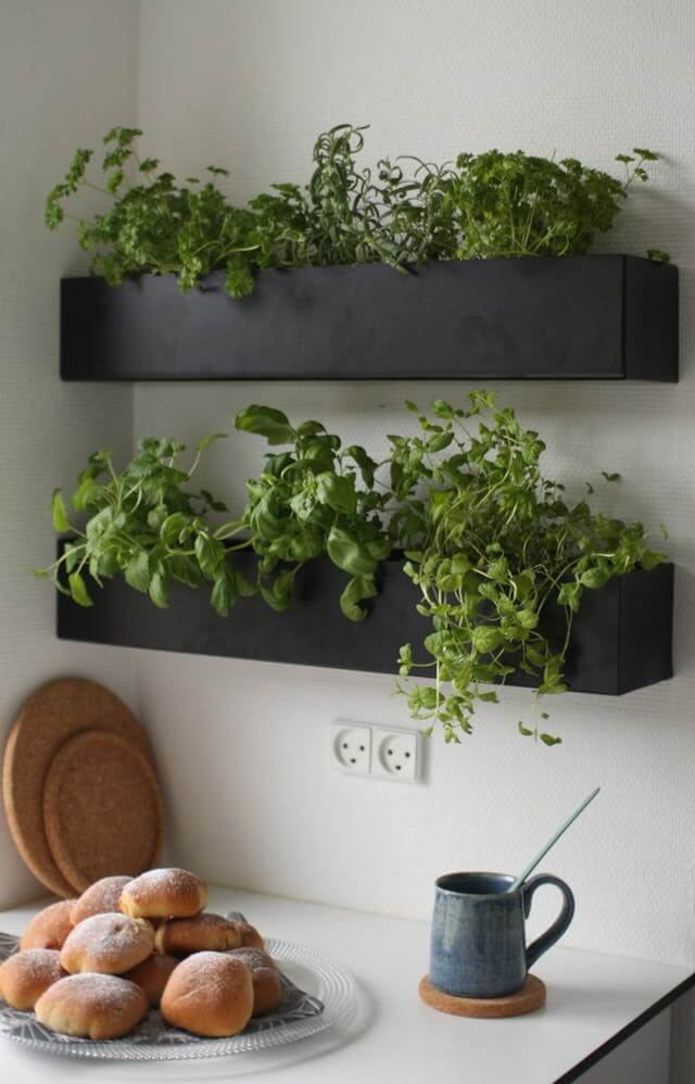 Kitchen Shelf Herb Garden