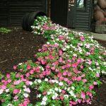 10-spilled-flower-pot-ideas-homebnc