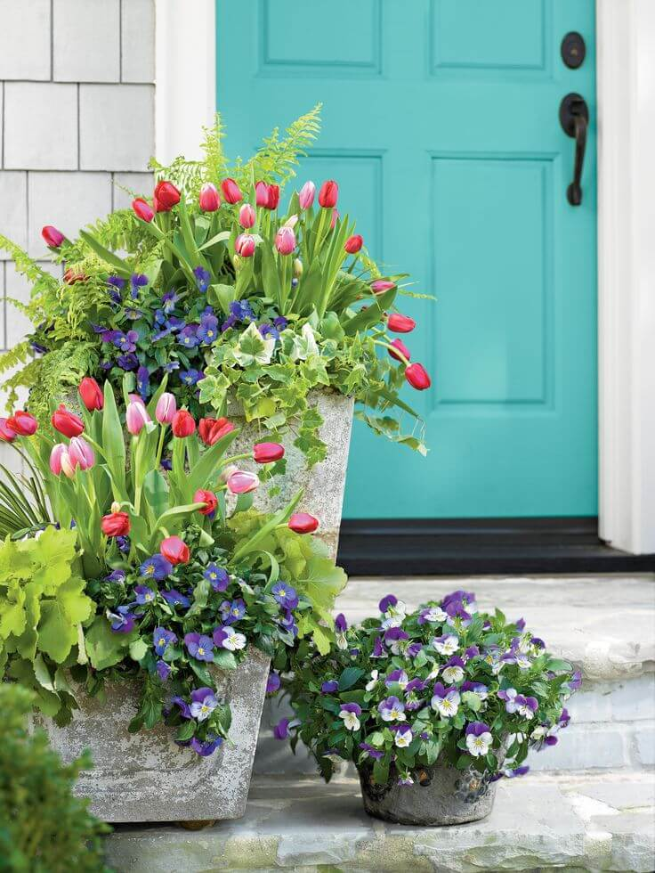 Concrete Planters with Blooming Tulips and Pansies