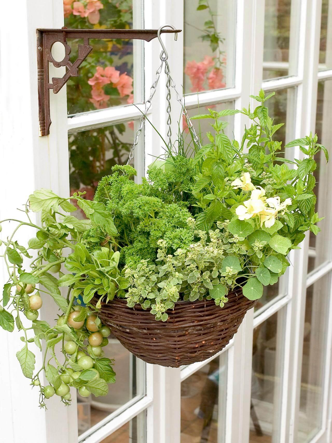 Herb Garden Hanging Basket Project