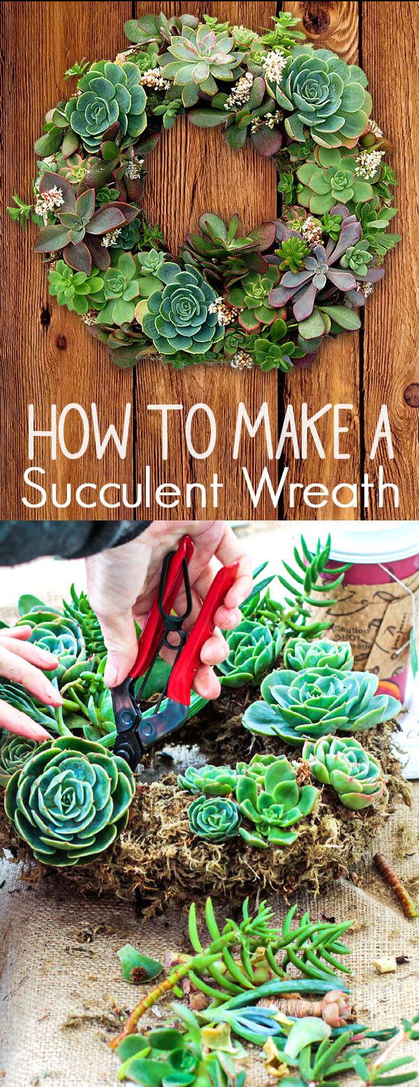 DIY Succulent Planter Idea for Wreaths