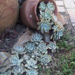 13-spilled-flower-pot-ideas-homebnc