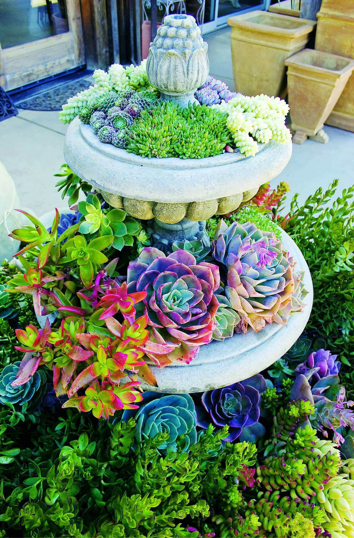 Colorful Succulents in an Elegant Birdbath
