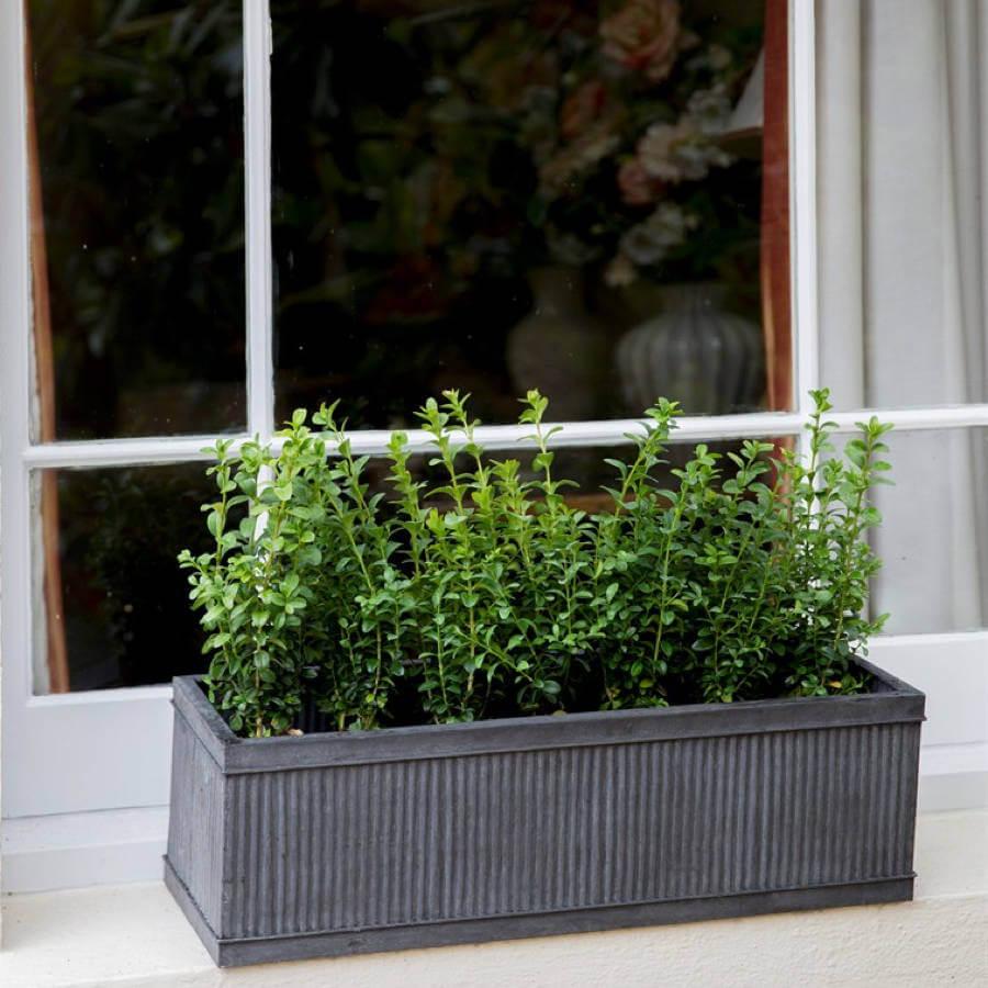 Ridged Dark Metal Window Box With Greenery