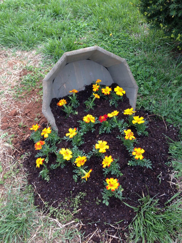 Spilled Flower Pot Idea with Marigolds
