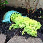 18-spilled-flower-pot-ideas-homebnc