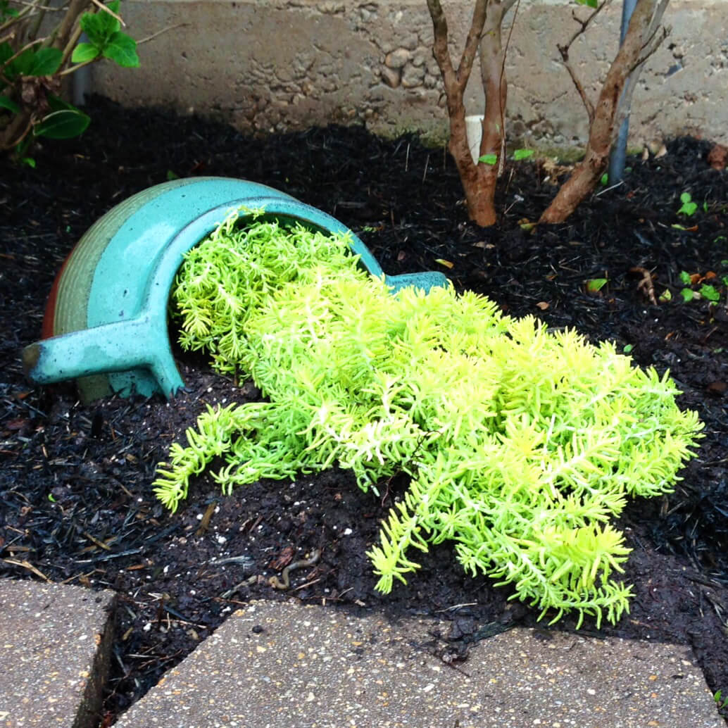 Greenery Tipping from a Blue Planter