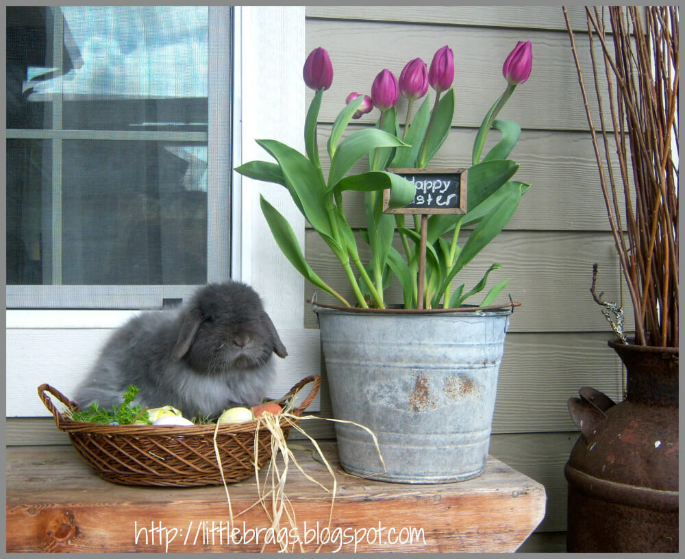 Blooming Tulips in an Old Pail with Bunny