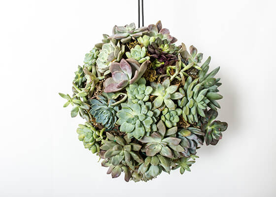 Learn to Make DIY Concrete Globes