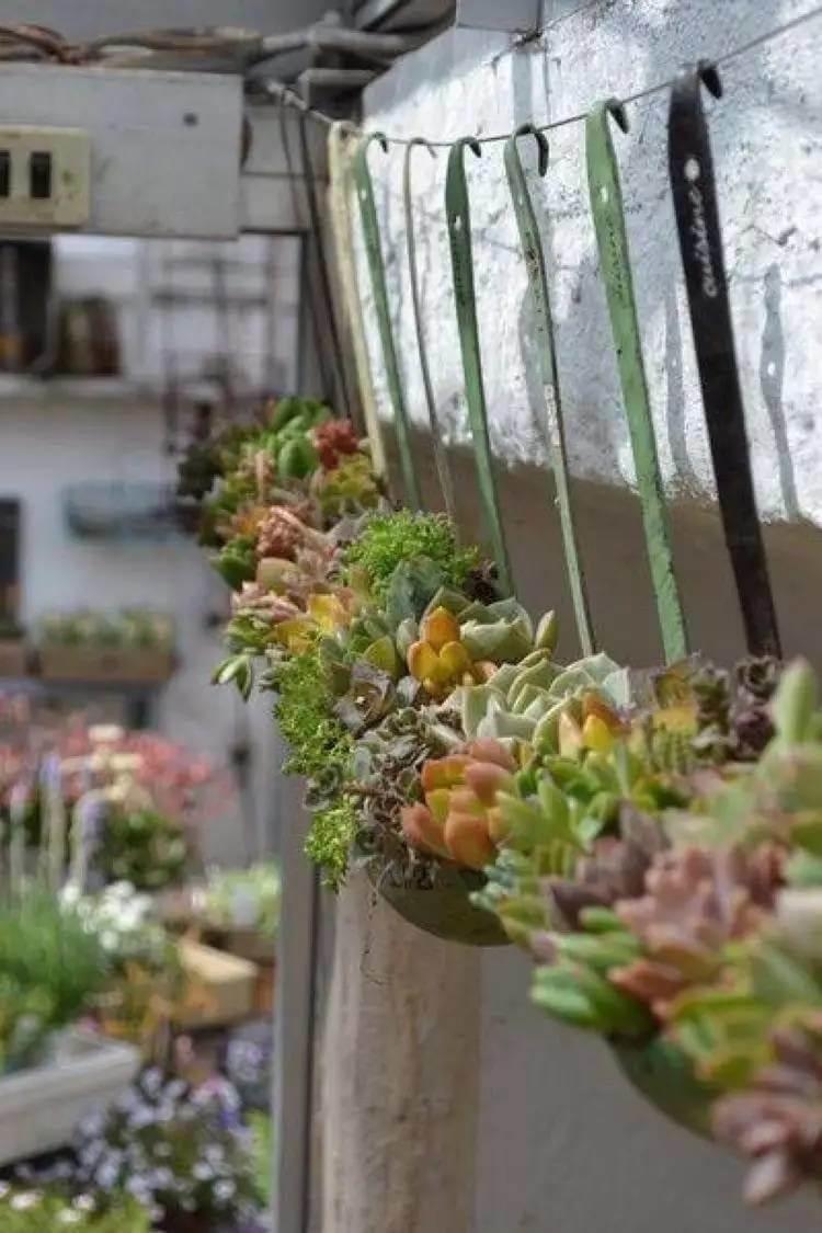 Antique Soup Ladle Succulent Planter Display