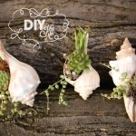 21-diy-shell-projects-ideas-homebnc