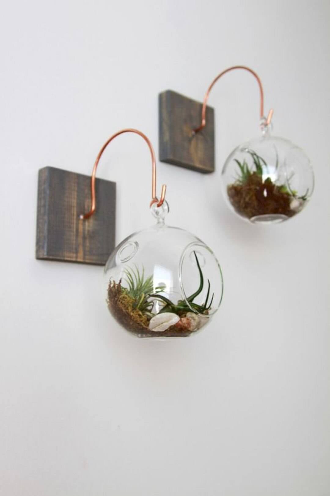 Wall Hanging Globes with Air Plants