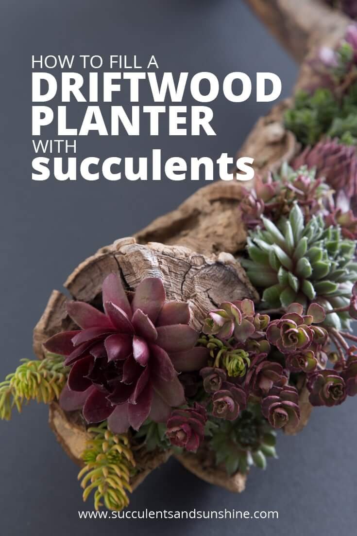 DIY Succulent Planter Idea with Driftwood