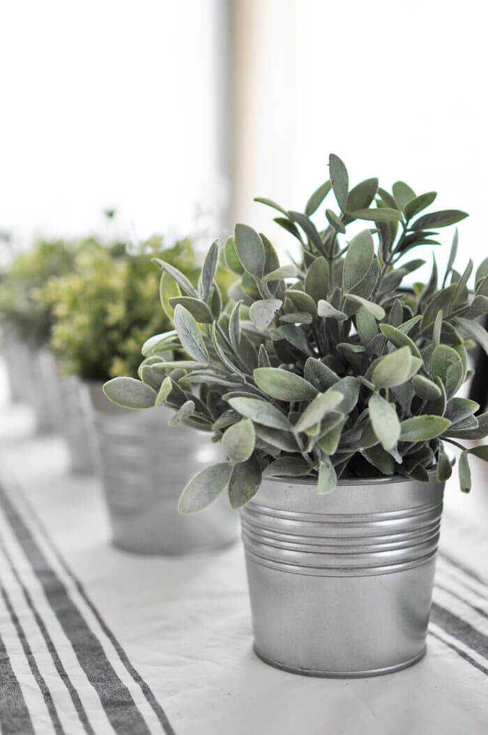 Galvanized Buckets with Sage and Herbs