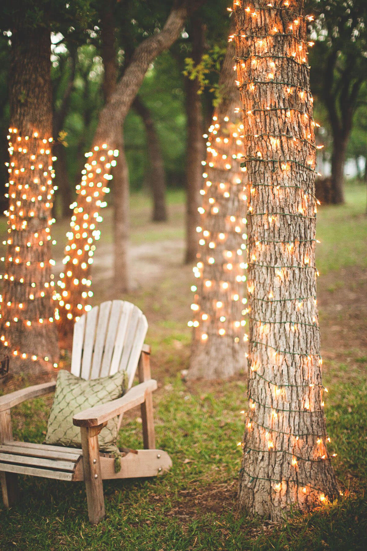 Tree Trunks Wrapped with Lights