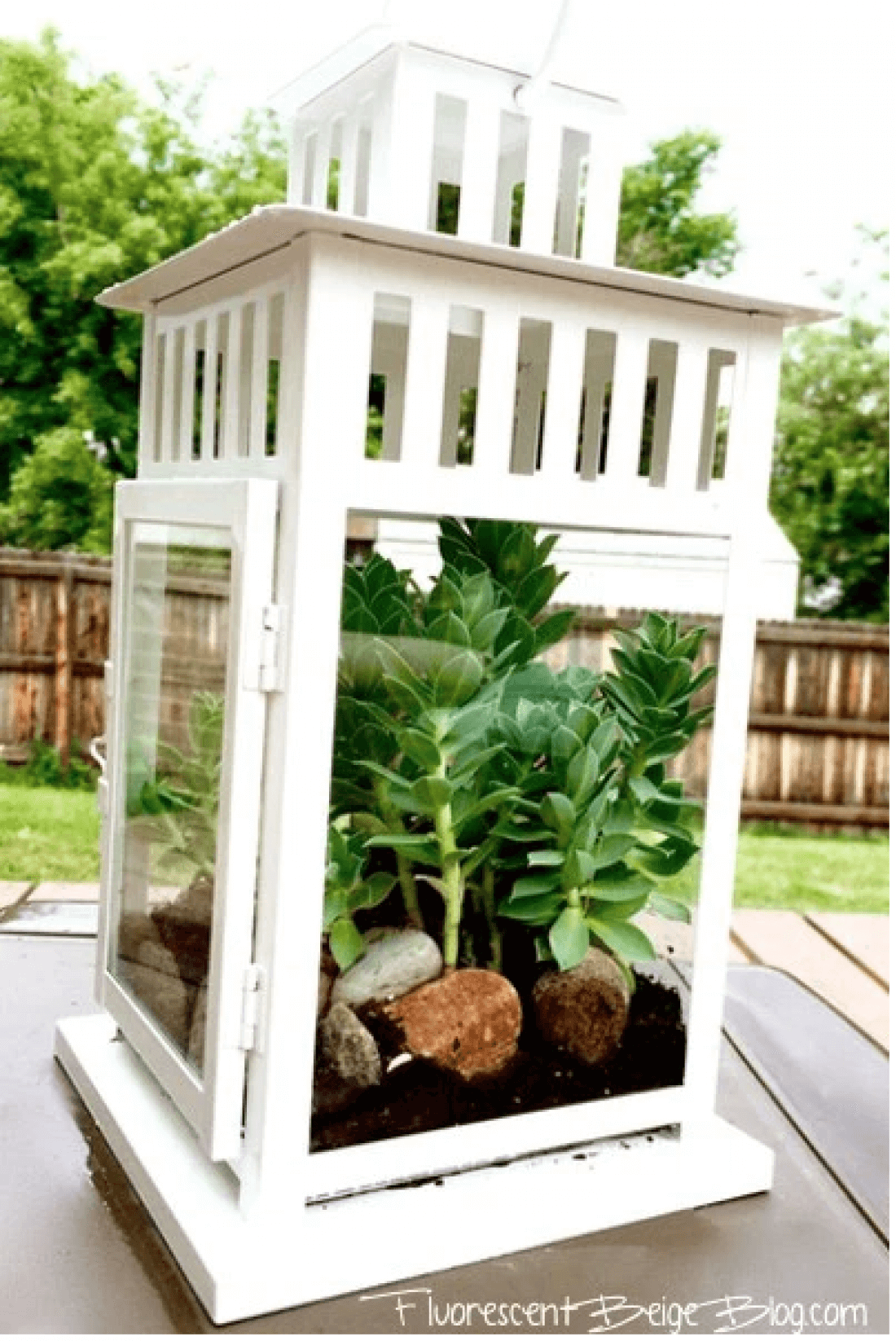 White Lantern Planter with Succulents