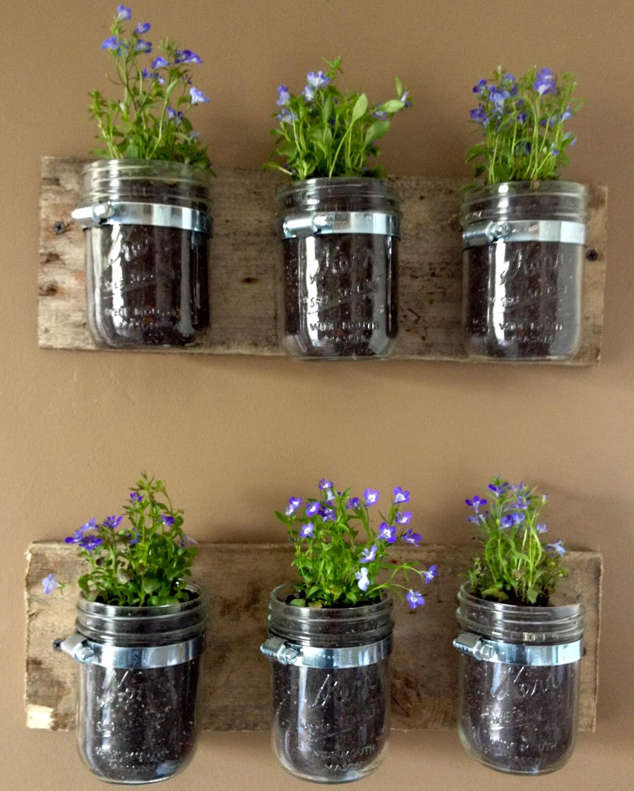 Hanging Mason Jars with Growing Flowers