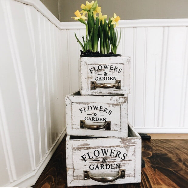Forced Bulbs in Stenciled Wooden Drawers