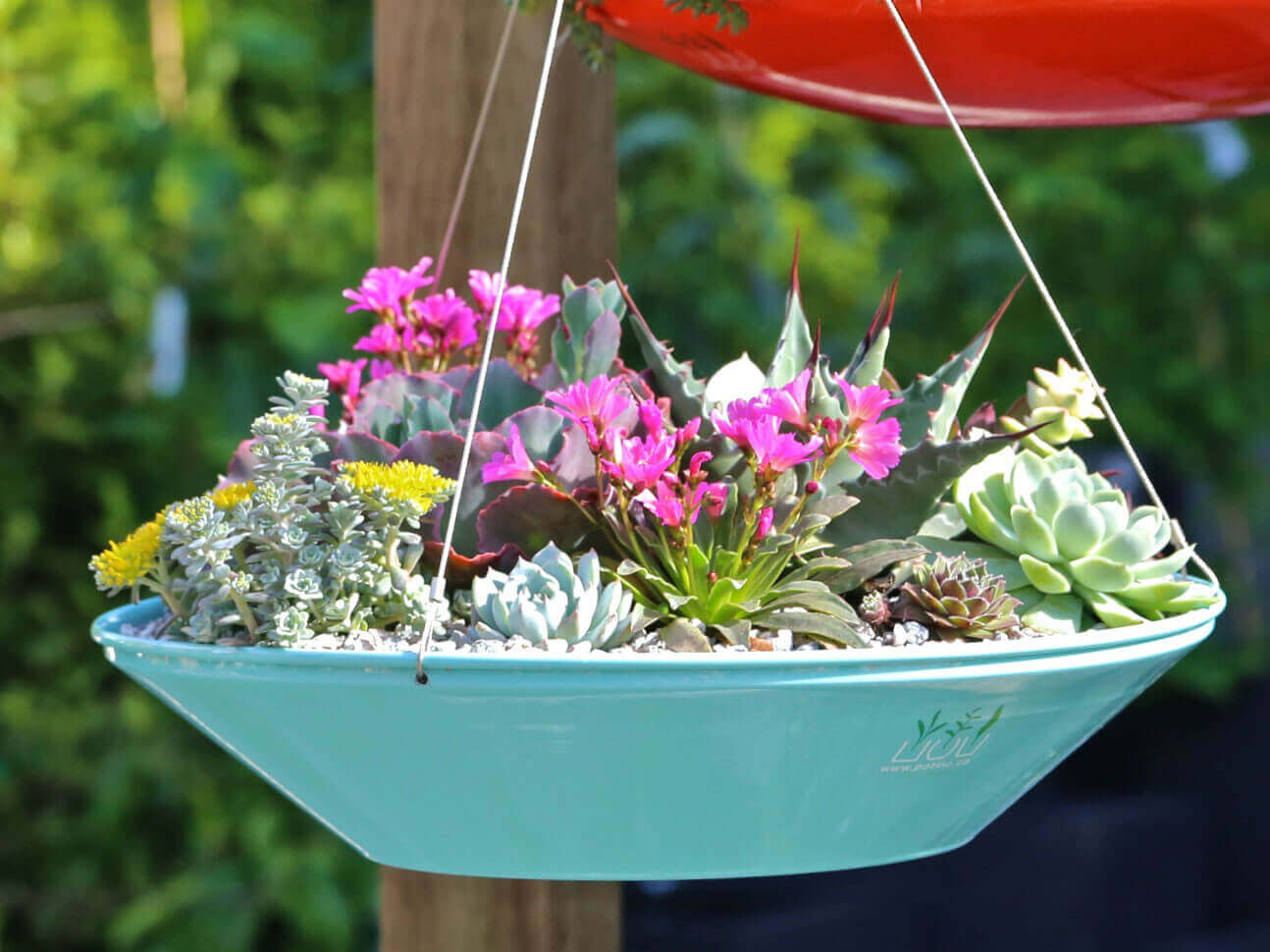 Saucer Style Succulent Hanging Planter