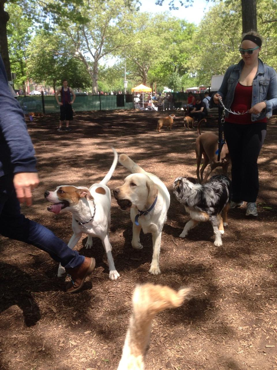 McCarren Park Dog Run